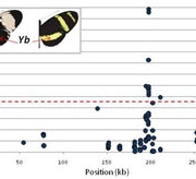 Genetics of mimicry in Heliconius